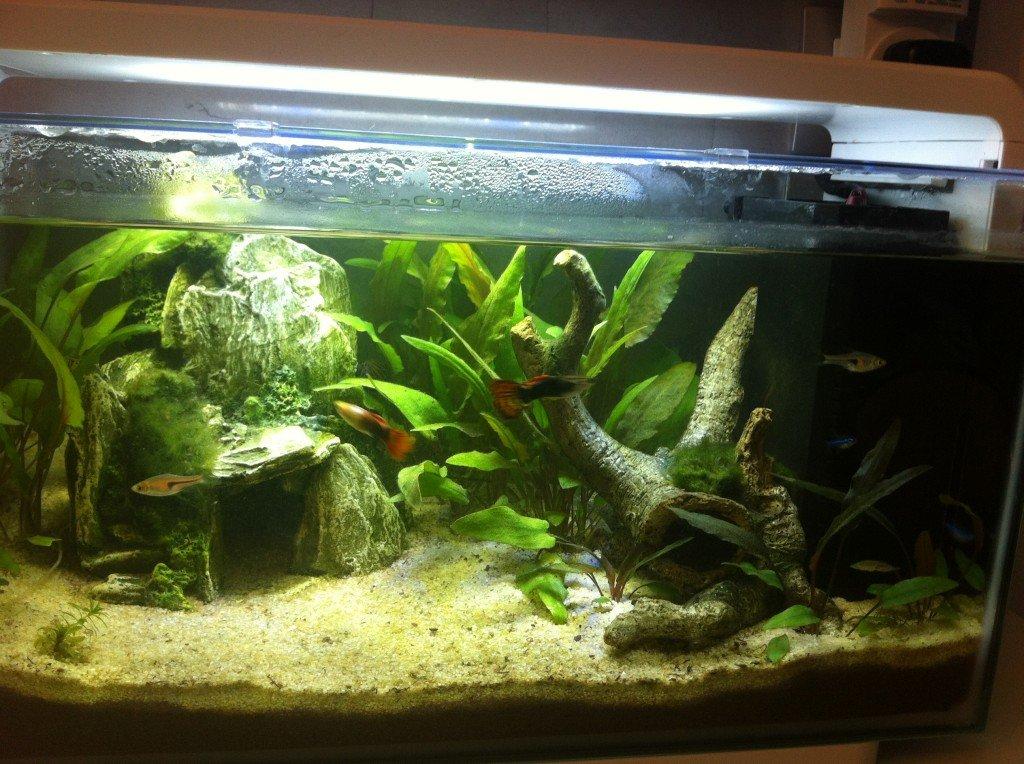 Mon nouvel aquarium d'eau douce ... dans Maison photo-3